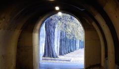 Parigi alberi