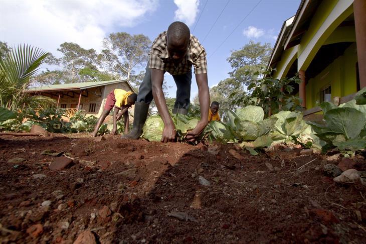 Getty Image Uganda Biodiversità