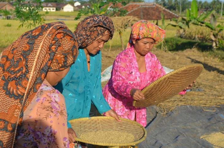 Produttori Riso Java Indonesia
