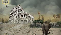Roma WWF